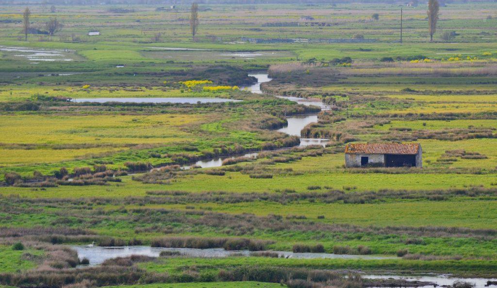 Marais de brouage, depuis la tour de broue