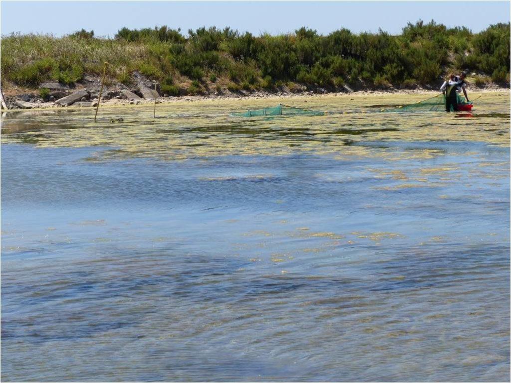 Terrain poissons, Fier d'Ars, Ecomusée